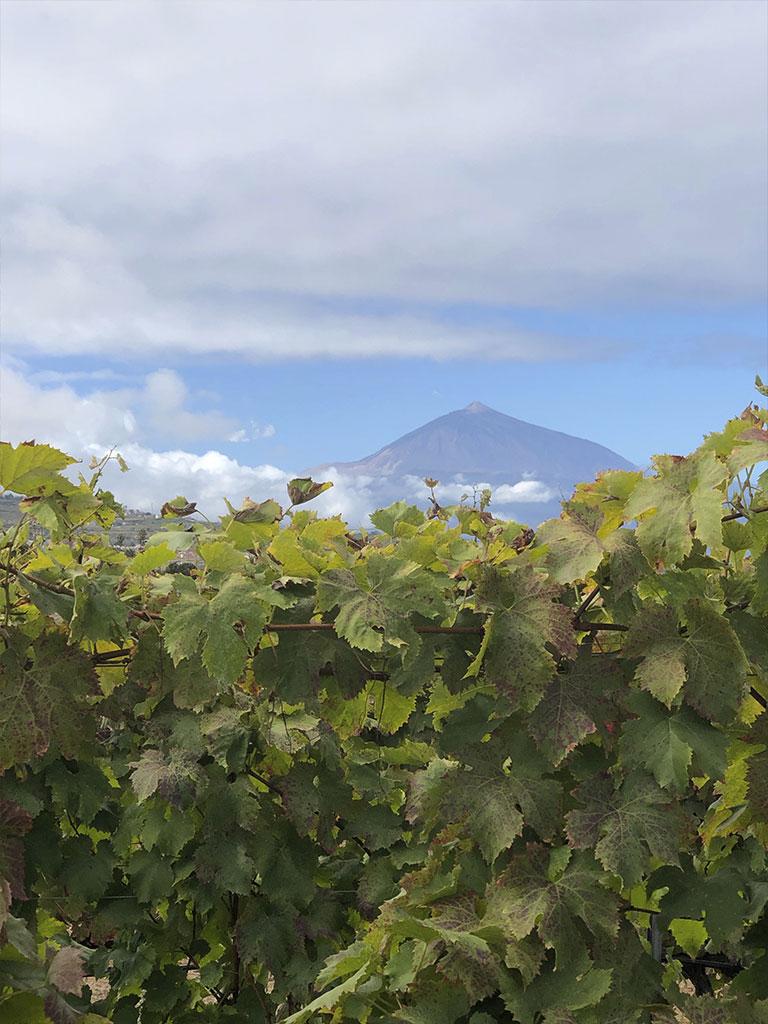 FINCA MARQUESES TACORONTE - Tierra Fundida - Vinos Canarios artesanales