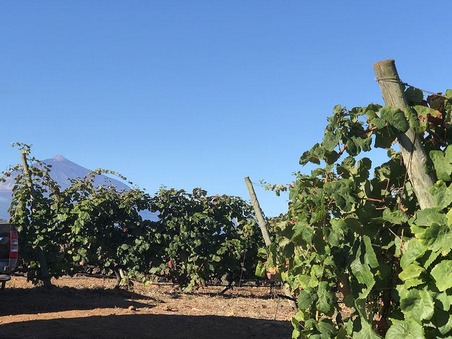 FINCA LOS MARQUESES - Tierra Fundida - Vinos Canarios artesanales
