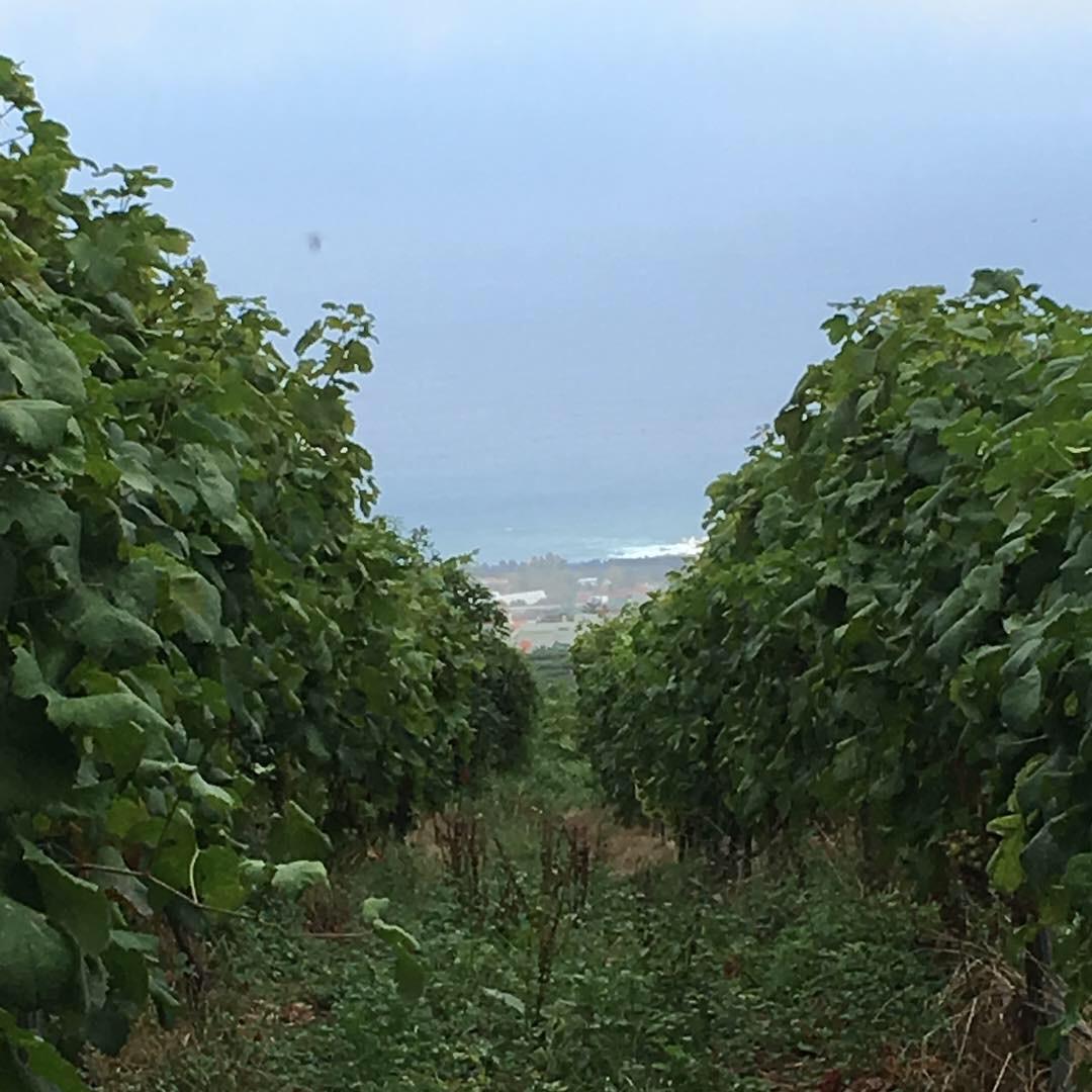 FINCA LOS TOPES - Tierra Fundida - Vinos Canarios artesanales